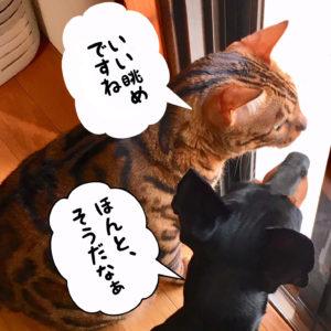 犬と猫の会話